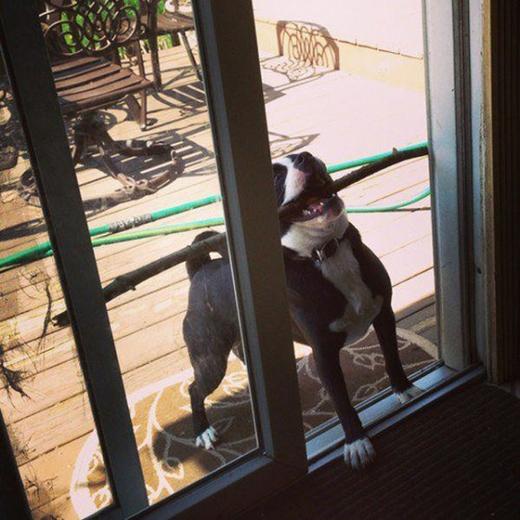 """""""Ai đó nghiêng cái cửa qua giùm tui với."""" (Ảnh: Internet)"""