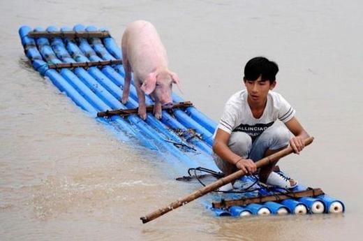 """""""Đồ con lợn, lại đây chèo phụ anh mày một tay coi."""" (Ảnh: Internet)"""