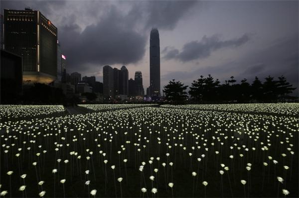 Vườn hồng này tọa lạc ở khu Central and Western District Promenade, Hồng Kông.(Ảnh: AP Hongkong)