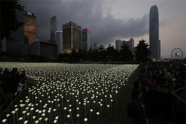 """Cứ mỗi 3m vuông lại có25 bông hồng được """"trồng"""".(Ảnh: AP Hongkong)"""