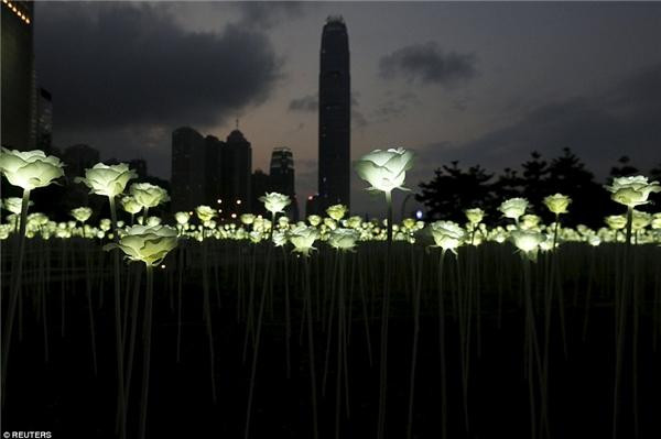 Được biết, vườn hồngsẽ tiếp tục đến với người dân của đảo quốc sư tử Singaporevào ngày 22/2này.(Ảnh: AP Hongkong)