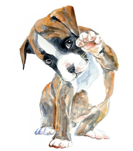 Người nhìn thấy con chó đầu tiên là người thẳng thắn, cá tính va hòa đồng. (Ảnh: Internet)