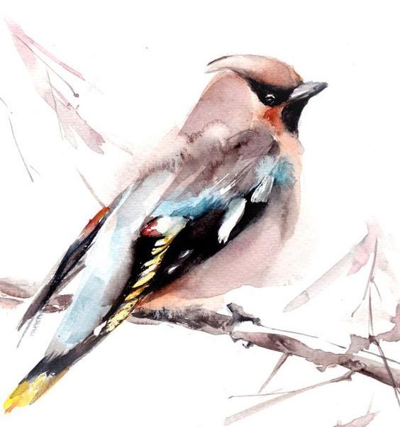 Người nhìn thấy được hình ảnh của chim là người tự tại và biết lắng nghe. (Ảnh: Internet)