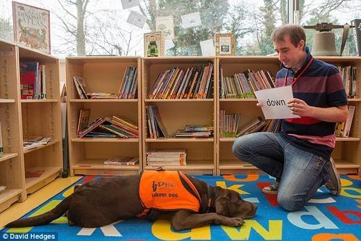 Chú chó có thể đọc được khá nhiều chữ. (Ảnh: David Hedges)