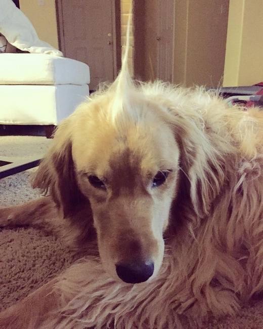 Đặc biệt là những chú chó cưng cũng không thể kém cạnh cô chủ xinh đẹp của mình rồi. (Ảnh: Internet)