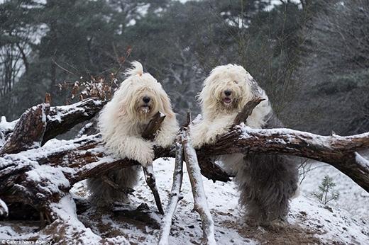 Chủ nhân của hai cô chó đã đăng cả ngàn tấm ảnh lên mạng và lượng người yêu thích ngày càng tăng. (Ảnh: Internet)