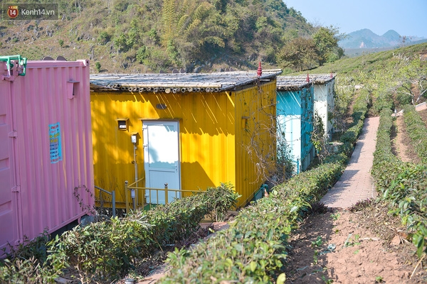 Lên Mộc Châu, ngủ nhà container đầy sắc màu giữa rừng mận trắng, cải vàng