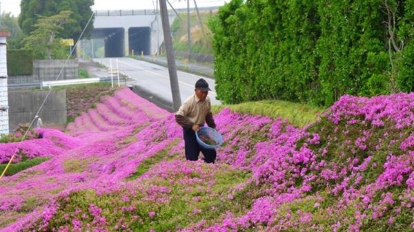 """Để tìm lại nụ cười cho """"hoàng hậu"""" của mình, """"quốc vương"""" Kuroki đã nảy ra ý định trồng một """"thảm hoa"""" ngát hương xung quanh lâu đài. (Ảnh: Internet)"""