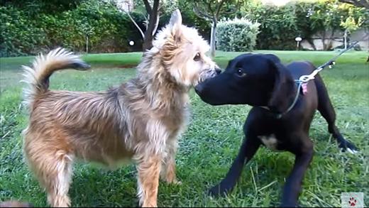 Khâm phục nghị lực sống của chú chó bị ngàn con ve hút máu