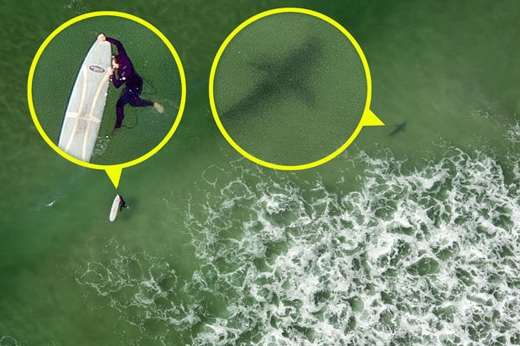 Người lướt sóng không hề hay biết về mối hiểm họa đang rình rập quanh mình. (Ảnh: Dailystar)