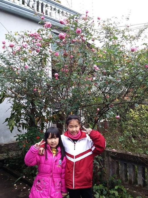 Các cháu của chị Dung tạo dáng bên cây hồng tươi thắm, ngát hương... (Ảnh: Internet)