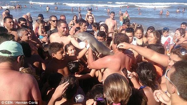 Chú cá heo bị vuốt ve, đùa nghịch... (Ảnh: CEN)