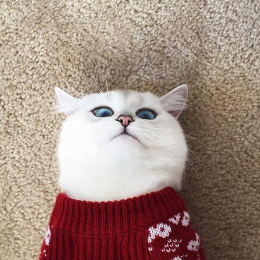 """""""Bấn loạn"""" trước chú mèo có đôi mắt xanh đẹp nhất quả đất"""