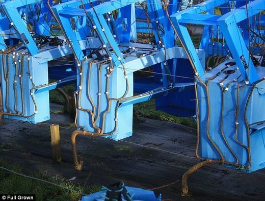 """Khám phá khu vườn trồng bàn ghế"""" duy nhất trên thế giới"""
