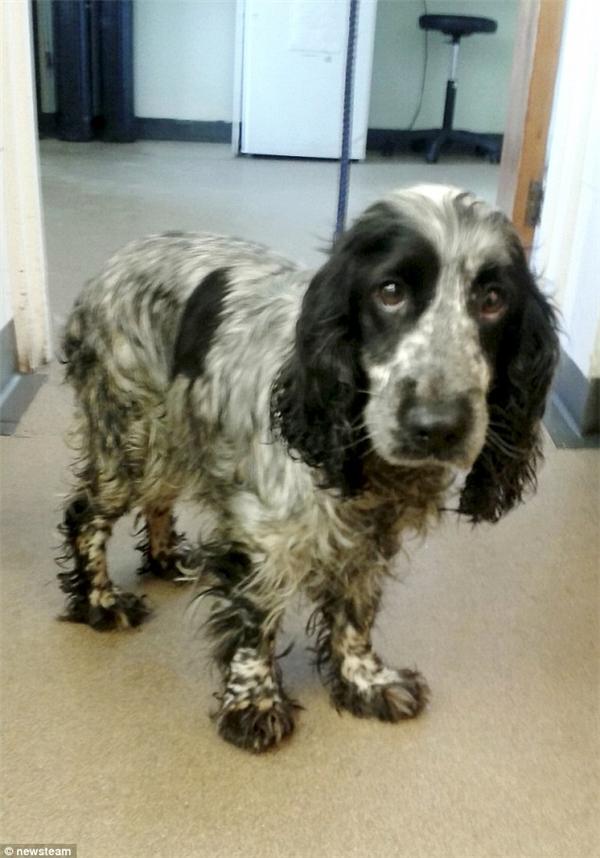 Chó mẹ hiện tại đang được chăm sóc và RSPCA vẫn đang tiến hành điều tra vụ việc. (Ảnh: Internet)