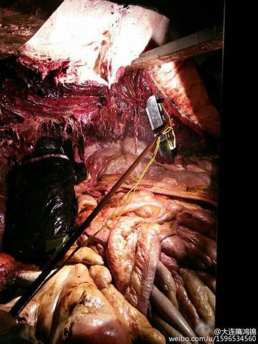 Hình ảnh bên trong xác cá voi khá rùng rợn. (Ảnh: Weibo)