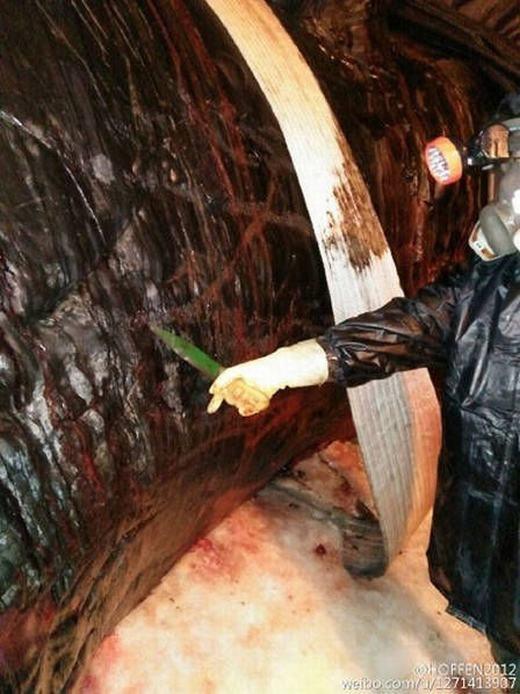 Khám nghiệm tử thi cá voi, công việc vất vả và không dành cho người yếu bóng vía. (Ảnh: Weibo)