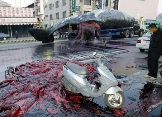 Vụ nổ xác cá voi trước đó tại Chiayi. (Ảnh: Internet)