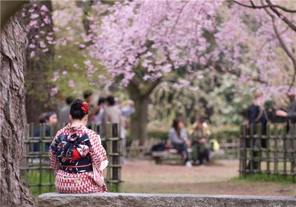 Kyoto – thủ đô cũ của Nhật Bản, nổi tiếng với phong tục tập quán lâu đời và tượng đài truyền thống.(Ảnh: Internet)