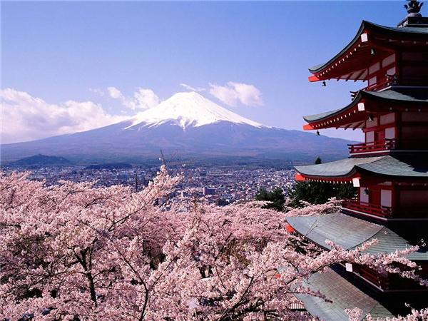 Sắc hồng nhuộm khắp thủ đô Tokyo vào mùa xuân.(Ảnh: Internet)