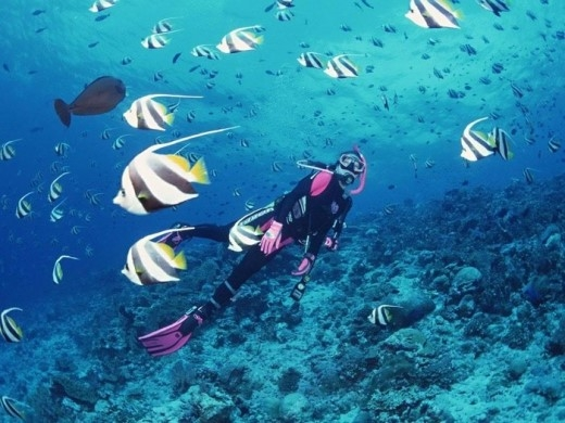 """Thám hiểm đại dương bao la là một trong những trải nghiệm cực """"chất"""" dành cho dân """"ghiền' thử thách, khám phá. (Ảnh: Internet)"""