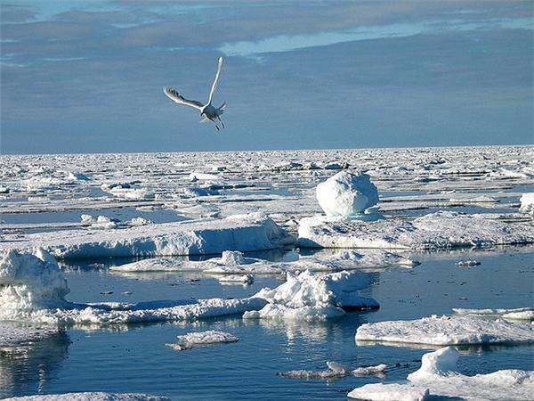 Môi trường ở Bắc Cực đã bị ô nhiễm nặng nề do hoạt động sản xuất và sinh hoạt của con người, gây ảnh hưởng đến các loài động, thực vật sống ở đây.(Ảnh: Internet)