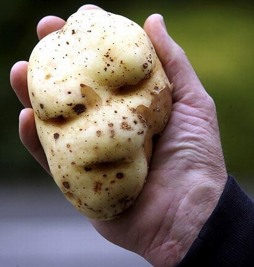 Củ khoai tây của một nông dân có tên Muggle, 49 tuổi, hiện đang sống ở Southampton, Hants, Anh có hình dạng giống hệt khuôn mặt của chúa tể Voldemort, kẻ thù của Harry Potter. (Ảnh: Internet)