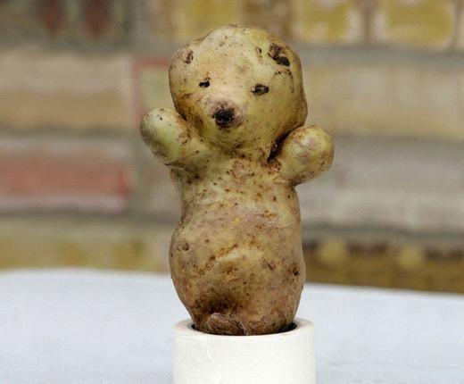 Củ khoai tây hình chú gấu dễ thương. (Ảnh: Internet)