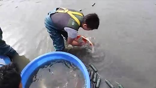 Đây là cách bắt cá chép đã trở thành