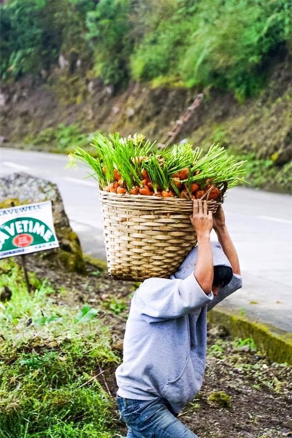 Chàng trai này đang khiêng vác những chiếc giỏ cà rốt. (Ảnh: Internet)