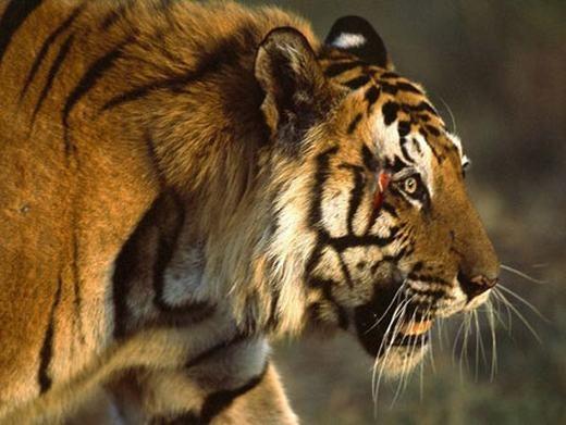 Cảm giác bị nhìn chằm chằm cũng thường xuyên xảy ra với động vật. (Ảnh: Internet)