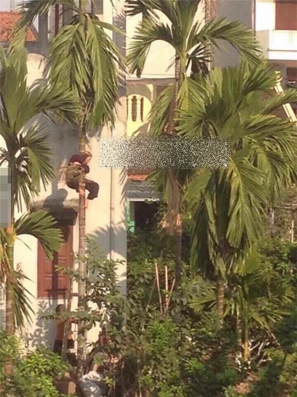 Bên dưới gốc cây là một nam thanh niêmtrung tuổi đang đứng giữ thang giúp cụ. (Ảnh: Internet)
