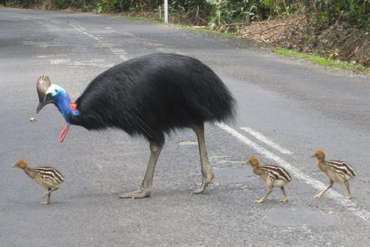 Hiện số lượng loài của chúng còn khá ít.Và đứng trước nguy cơ tuyệt chủng. (Ảnh: Internet)