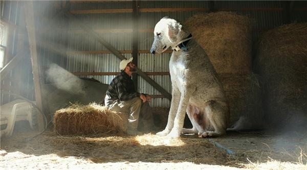 Bay bổng trước cuộc phiêu lưu của bé cún khổng lồ bên chàng chủ tí hon