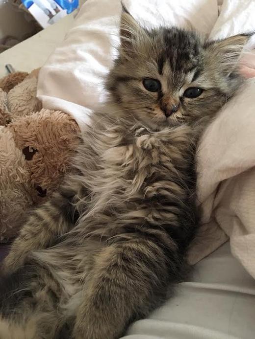 Bảo mẫu mèo: việc nhẹ lương cao ngất ngưởng 90 triệu/tháng