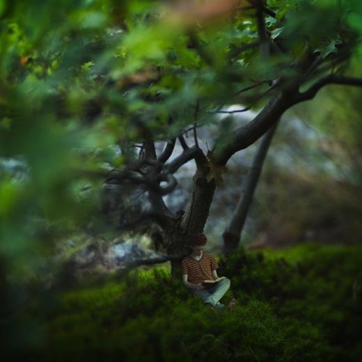 Lạc dưới bóng sồi.(Ảnh: Fiddle Oak)