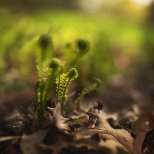 Những ngày xuân cũ.(Ảnh: Fiddle Oak)