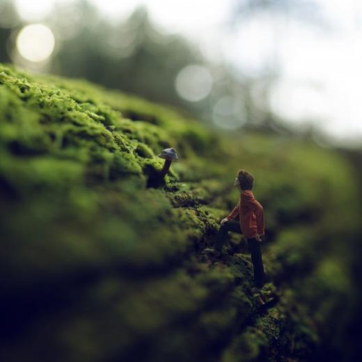 Đường tắt hái nấm.(Ảnh: Fiddle Oak)
