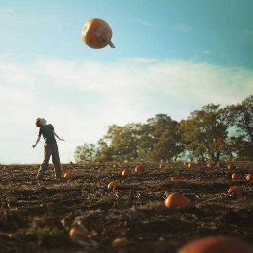 Halloween chối từ.(Ảnh: Fiddle Oak)