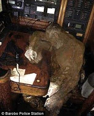 Xác ướp được phát hiện nằm gần chiếc điện thoại radio, có thể Manfred đang cố gắng thực hiện một cuộc gọi trước khi chết. Ảnh: Dailymail