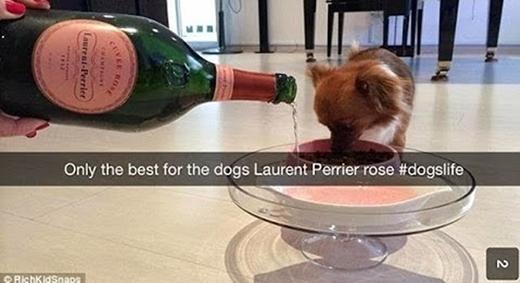Loại rượu đắt tiền cả người còn chưa có để uống thì vị chủ nhân này chỉ dám đem cho... chó uống. (Ảnh: Internet)