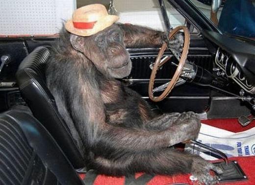 Đối với anh, lái xe hơi dễ như bắt rận thôi. Lên xe đi mấy em!(Ảnh: Internet)