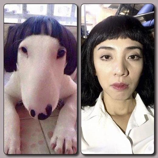 """Không thể nhịn được cười khi nhìn hình ảnh Thu Trang đặt cạnh chú chó đội """"quả đầu"""" tương tự cô"""