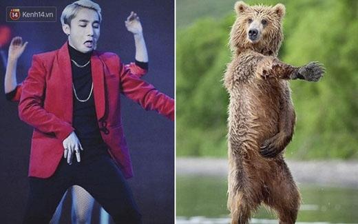 """Chú gấu trong hình như nói rằng: """"Này, tôi cũng biết nhảy """"Không phải dạng vừa đâu"""" đấy nhé!"""""""
