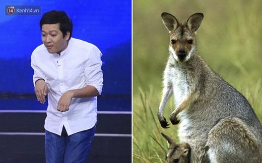 """""""Chú Kangaroo"""" Trường Giang đi lạc ở đâu đây?"""