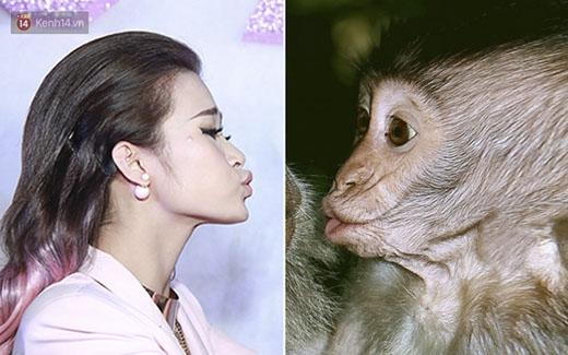 Hành động chu môi của Đông Nhi được fan ví với khoảnh khắc tương tự của... chú khỉ con