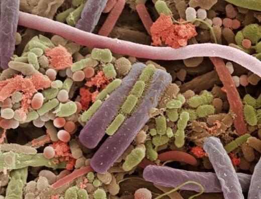Còn đây là những gì có trong nước bọt. Các nhà khoa học cho biết, 1ml nước bọt chứa tới 1 triệu vi khuẩn, gồm hơn 600 loại khác nhau. (Ảnh: Internet)