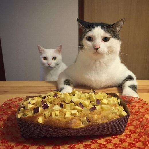 Bộ ông tưởng có tí thức ăn này đã mua chuộc được anh em tôi á?