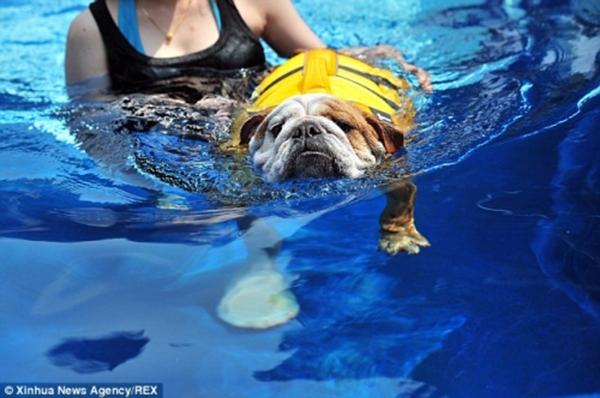 Các thú cưng sẽ được trang bị phao bơi kĩ lưỡng. (Ảnh: Internet)