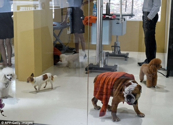 Sau khi tắm, các chú thú cưng sẽ được đưa vào một căn phòng để hong khô. (Ảnh: Internet)